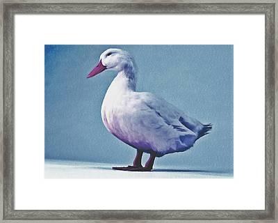 Pekin Ducks 2 Framed Print by Lanjee Chee