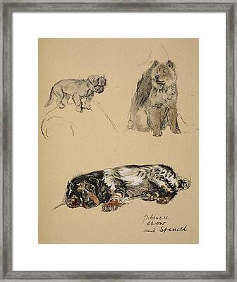 Pekinese, Chow And Spaniel, 1930 Framed Print by Cecil Charles Windsor Aldin