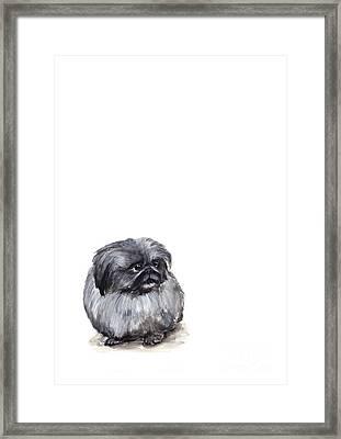 Pekingese - Pekinese Framed Print by Barbara Marcus