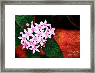 Pelargonium Graveolens II Framed Print by Floyd Menezes