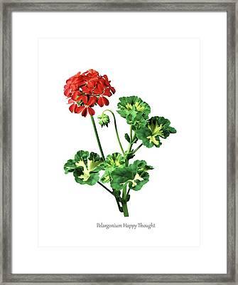 Pelargonium 'happy Thought' Framed Print