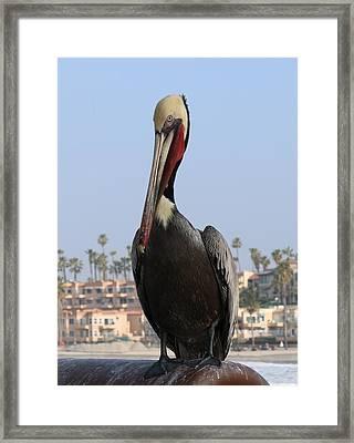 Pelican - 2  Framed Print
