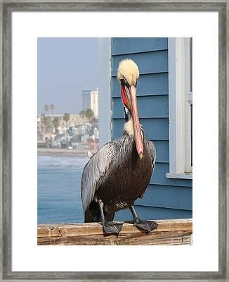 Pelican - 4 Framed Print