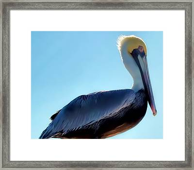 Framed Print featuring the photograph Pelican 1 by Dawn Eshelman