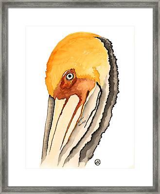 Pelican Framed Print by Alexandra  Sanders
