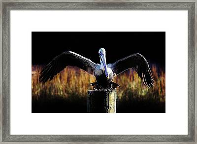 Pelican All Aglow Framed Print by Paulette Thomas