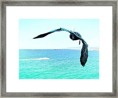 Pelican And Jetski Framed Print by Brian D Meredith