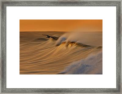 Framed Print featuring the photograph Pelican And Wave  Mg_6950 by David Orias