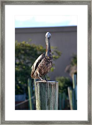 Pelican At Boat Dock Framed Print