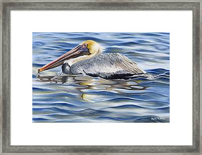 Pelican At Cedar Point Framed Print by Phyllis Beiser