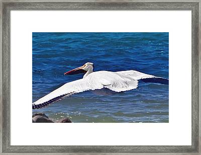 Framed Print featuring the photograph Pelican At Pyramid Lake by Lula Adams