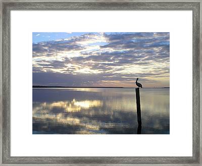 Pelican At Sunset Framed Print