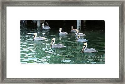 Pelican Ballet Framed Print by Claudette Bujold-Poirier