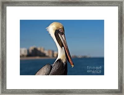 Framed Print featuring the photograph Pelican by Barbara McMahon