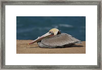 Pelican Beach Framed Print by Bob Smithing