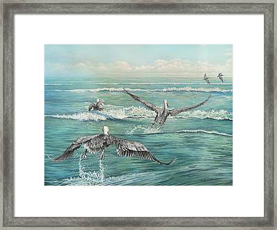Pelican Beach Framed Print