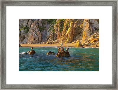 Pelican, Cabo San Lucas, Baja, Mexico Framed Print