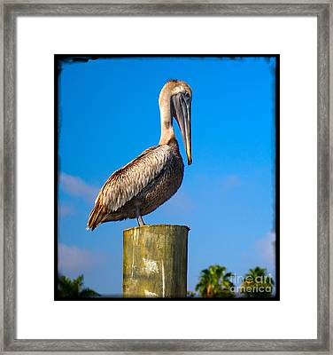 Framed Print featuring the photograph Pelican by Carsten Reisinger