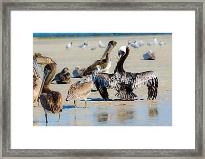 Pelican Drying Framed Print