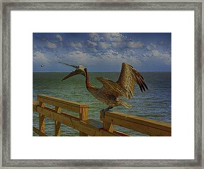 Pelican Eating Framed Print