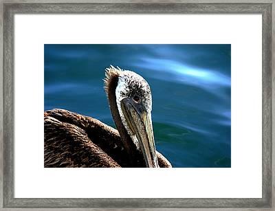 Pelican Eyes Framed Print