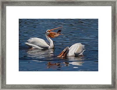 Pelican Fishing Buddies Framed Print by Kathleen Bishop