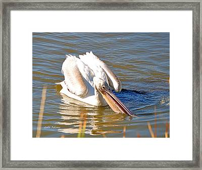 Framed Print featuring the photograph Pelican Fishing by Lula Adams