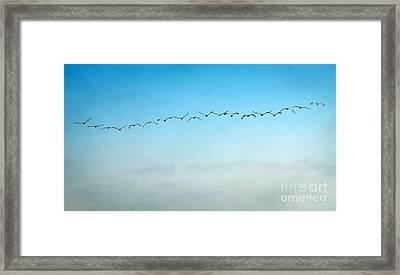 Pelican Flight Line Framed Print