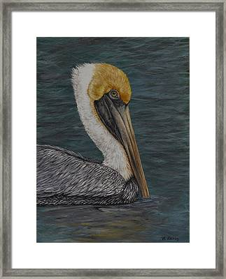 Pelican Floating In The Bay Framed Print