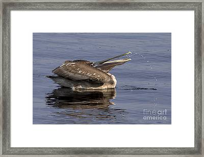 Pelican Fountain  Framed Print