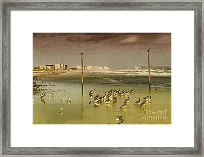 Pelican Haven Framed Print by Deborah Benoit