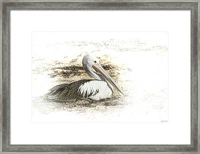 Framed Print featuring the photograph Pelican by Holly Kempe