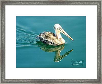 Framed Print featuring the photograph Pelican In San Francisco Bay by Clare Bevan