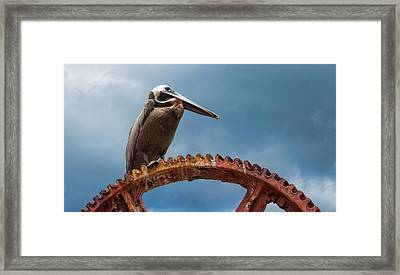 Pelican In St. Croix Framed Print