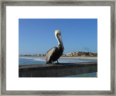 Framed Print featuring the photograph Pelican  by Kay Gilley