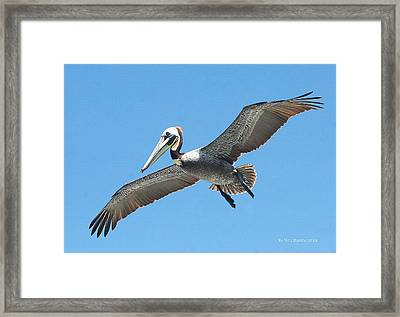 Framed Print featuring the photograph Pelican Landing On  Pier by Tom Janca