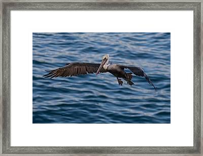 Pelican Landing Framed Print by Sonny Marcyan