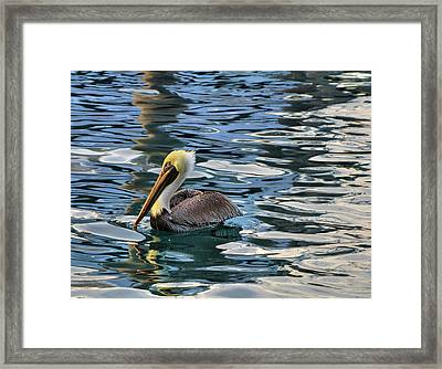 Pelican Monet Framed Print by Debra and Dave Vanderlaan