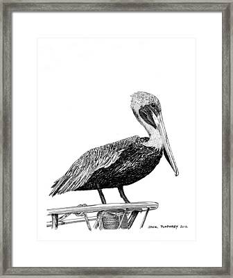 Pelican Of Monterey Framed Print by Jack Pumphrey