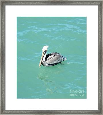 Framed Print featuring the photograph Pelican by Oksana Semenchenko