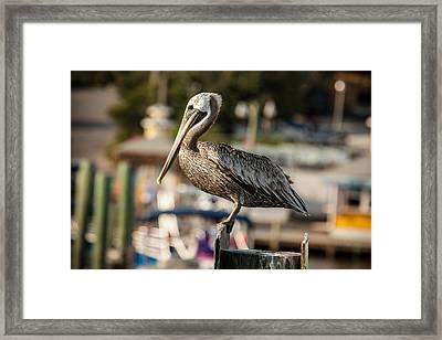 Pelican On A Pole Framed Print