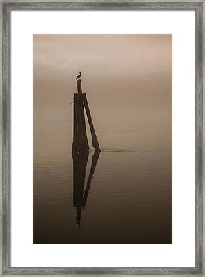 Pelican On A Stick Framed Print