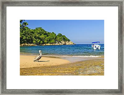 Pelican On Beach Framed Print by Elena Elisseeva