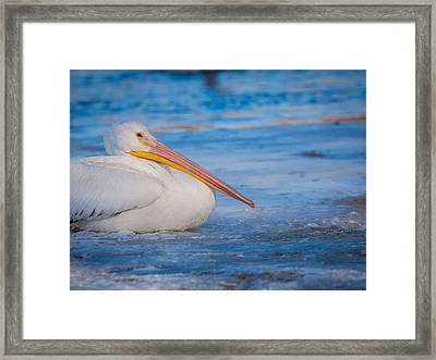 Pelican On Ice Framed Print