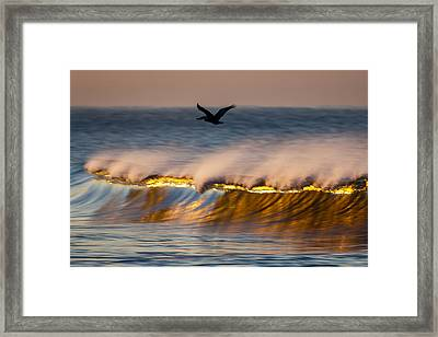 Pelican Over Wave  C6j9351 Framed Print