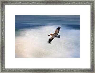 Pelican Over Wave  Mg_1212 Framed Print
