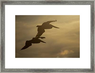 Framed Print featuring the photograph Pelican Pair by Erin Kohlenberg