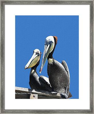 Framed Print featuring the photograph Pelican Pair by Tom Janca