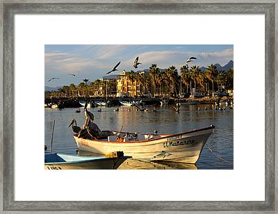 Framed Print featuring the photograph Pelican Panga by Kandy Hurley