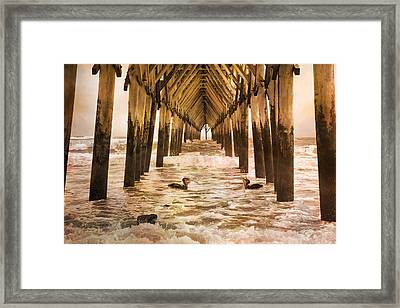 Pelican Paradise Framed Print by Betsy Knapp